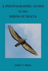 A Photographic Guide to the Birds of Malta