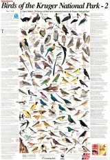 Newman's Birds of the Kruger National Park, 2: K-Z - Poster