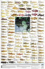 Freshwater Fishes, Southern Africa - Poster: All the Smaller Indigenous and Introduced Species