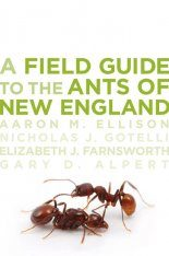 A Field Guide to the Ants of New England