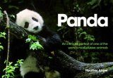 Panda: An Intimate Portrait of One of the World's Most Elusive Animals
