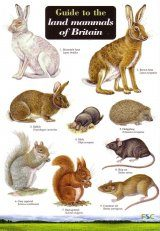 Guide to the Land Mammals of Britain