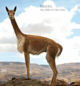 Vicuña: The Fibre of the Gods