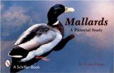 Mallards: A Pictorial Study