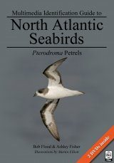 Multimedia Identification Guide to North Atlantic Seabirds: Pterodroma Petrels Image
