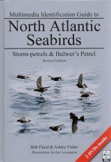 Multimedia Identification Guide to North Atlantic Seabirds: Storm-petrels & Bulwer's Petrel Image
