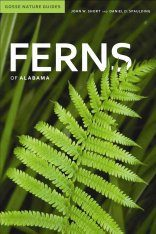 Ferns of Alabama Image