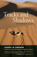 Tracks and Shadows Image