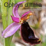 Ophrys d'Italia [French / Italian]