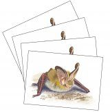 Set of Four Greetings Cards (4 x Bats)