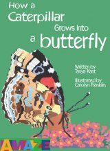 How a Caterpillar Grows into a Butterfly
