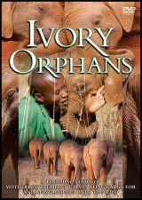 Ivory Orphans (All Regions)