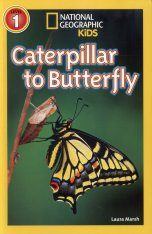 Caterpillar to Butterfly Image