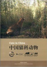 Cats in China [English / Chinese] Image