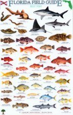 Florida Field Guide, Reef Fish Image