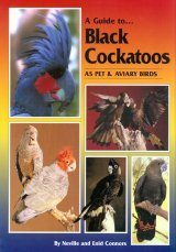 A Guide to Black Cockatoos as Pet & Aviary Birds