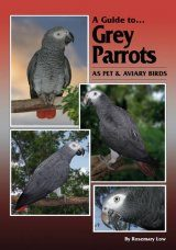 A Guide to Grey Parrots