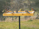 Pole Mounted Bird Table