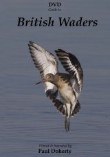 DVD Guide to British Waders (All Regions)