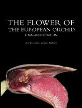 The Flower of the European Orchid