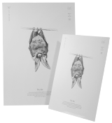 Brown Long-eared Bat Print A3