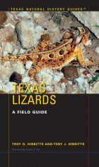 Texas Lizards Image