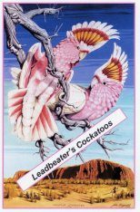Leadbeater's Cockatoos Poster