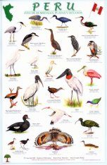 Peru: Birds of Wetlands Beaches and Oceans / Aves de Humedales, Playas y Oceanos