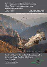 Reintroduction of Griffon Vulture Gyps fulvus in Kresna Gorge, Southwest Bulgaria 2010-2015 [English / Bulgarian] Image