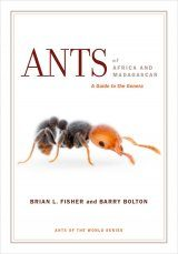 Ants of Africa and Madagascar Image