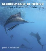 Glorious Gulf of Mexico Image