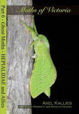Moths of Victoria, Part 6: Ghost Moths – Hepialidae and Allies Image