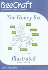 The Honey Bee Illustrated