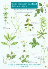 Guide to Ancient Woodland Indicator Plants Image