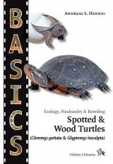 Spotted & Wood Turtles (Clemmys guttata & Glyptemys insculpta)