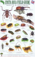 Costa Rica Field Guide: Insects & Arachnids [English / Spanish] Image