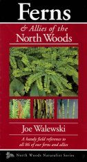Ferns, Horsetails & Clubmosses of the North Woods Image