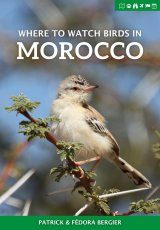 Where to Watch Birds in Morocco Image