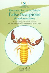 Illustrated Key to the British False Scorpions (Pseudoscorpions) Image