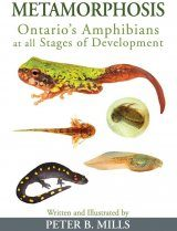 Metamorphosis: Ontario's Amphibians at All Stages of Development