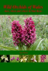 Wild Orchids of Wales