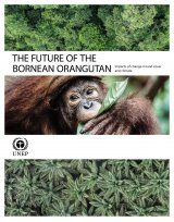 The Future of the Bornean Orangutan