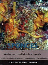 Sponges of Andaman and Nicobar Islands