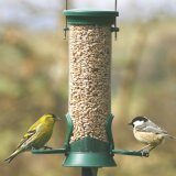 Challenger Plastic Seed Feeder