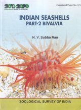 Indian Seashells, Part 2: Bivalvia