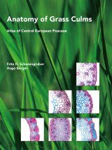 Anatomy of Grass Culms