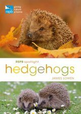 RSPB Spotlight: Hedgehogs