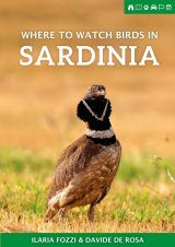 Where to Watch Birds in Sardinia
