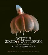 Octopus, Squid & Cuttlefish