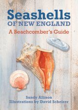 Seashells of New England